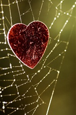 Preview iPhone wallpaper The heart of the spider web of love