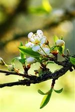 나뭇가지에 따뜻한 봄 하얀 꽃
