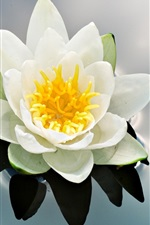 Preview iPhone wallpaper Water lily flower bud petals
