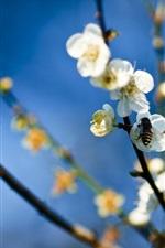 비과 흰색 꽃