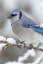 Preview iPhone wallpaper Bird on the tree winter snows