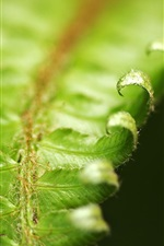 Preview iPhone wallpaper Close-up of fern leaves