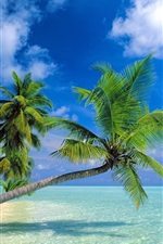 Preview iPhone wallpaper Coconut trees beach