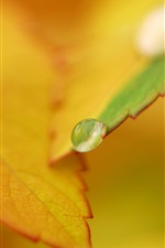 Preview iPhone wallpaper Dew on autumn orange leaves