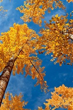 Preview iPhone wallpaper Forest autumn scene