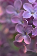 Preview iPhone wallpaper Four petals purple flowers