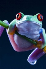 Preview iPhone wallpaper Frog close-up