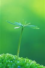 Brotos verdes da primavera