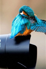 Preview iPhone wallpaper Kingfisher on the camera lens