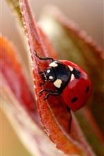 Preview iPhone wallpaper Leaf flower ladybug