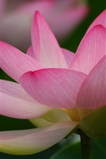 Preview iPhone wallpaper Lotus macro photography