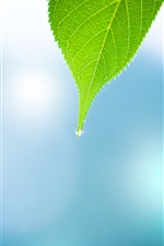 Preview iPhone wallpaper Nature leaf