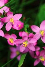 Preview iPhone wallpaper Purple flowers petals macro photo
