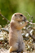 Preview iPhone wallpaper Summer Nature gophers