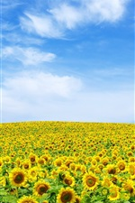 Preview iPhone wallpaper Sunflowers sky horizon