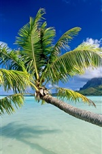 Preview iPhone wallpaper The sea palm tree