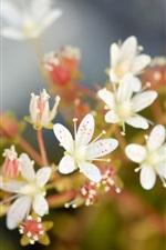 Flores brancas macro fotografia