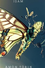 Preview iPhone wallpaper Butterfly insects struggle