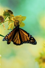 Preview iPhone wallpaper Butterfly on yellow flowers