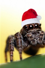Preview iPhone wallpaper Christmas hat spider
