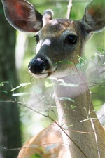Preview iPhone wallpaper Deer in the forest