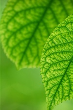 Preview iPhone wallpaper Fresh green leaves of spring