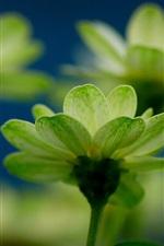 Green flowers macro
