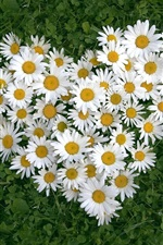 Preview iPhone wallpaper Heart-shaped white daisy of love