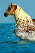 Preview iPhone wallpaper Horse running water