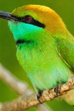 Preview iPhone wallpaper Macro photography of green bird