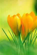 草の中にオレンジ色の花