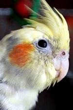 Preview iPhone wallpaper Parrot bird close-up