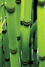 Spring green bamboo