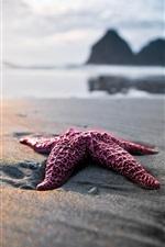 미리보기 iPhone 배경 화면 해변에 불가사리