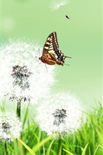 Summer herb dandelion flower and butterfly