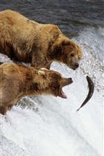 Preview iPhone wallpaper Three bears fishing fish