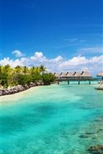 Tropical ocean sea palm houses