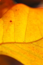Preview iPhone wallpaper Yellow leaves of autumn close-up
