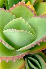 미리보기 iPhone 배경 화면 알로에 잎