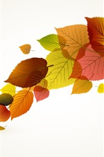 Autumn leaves vector creative