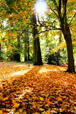 Preview iPhone wallpaper Autumn trees nature leaves and sun