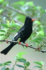 Black bird on tree branch