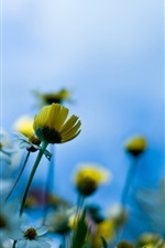 Blue background of yellow flowers