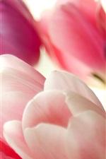 Букет из розовых тюльпанов макросов