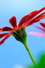 Chamomile blurred background
