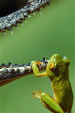 Preview iPhone wallpaper Crocodile and the Frog