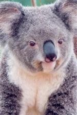 Preview iPhone wallpaper Cute koala