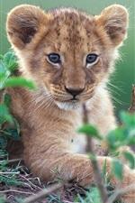 Cute little lion in green bushes