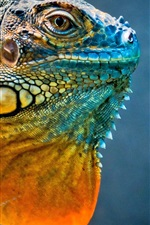 Preview iPhone wallpaper Dragon lizard, a chameleon