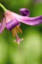 Flor fundo borrão